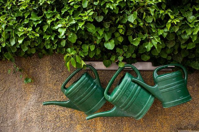 Gardening And A Green Thumb or Black Thumb