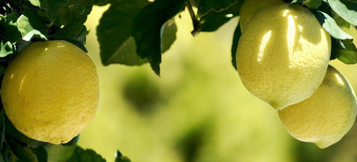 Another Lemon